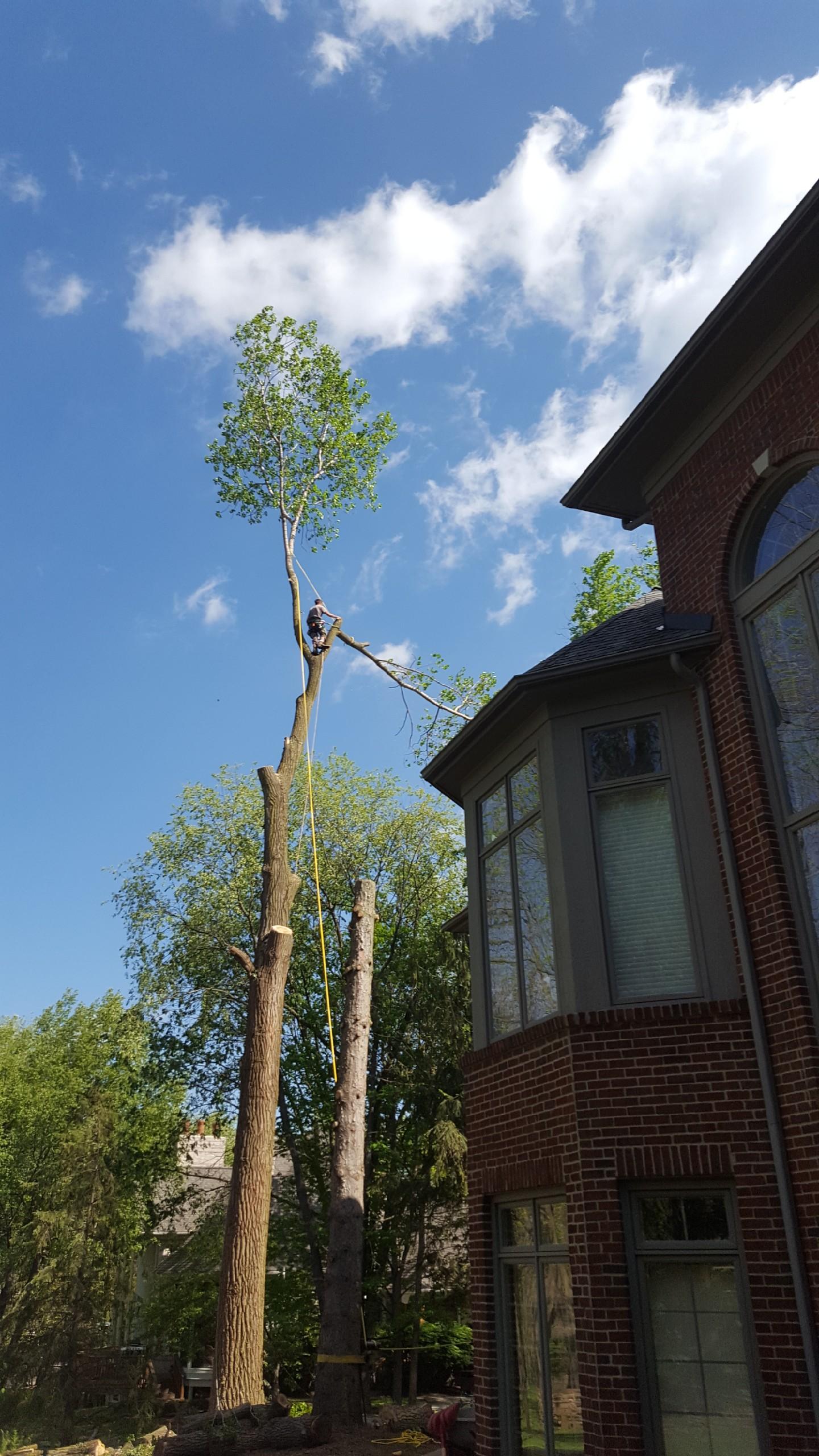 Coffman's Tree Service image 25