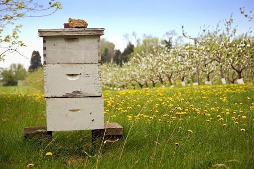 Little Giant Beekeepers image 0