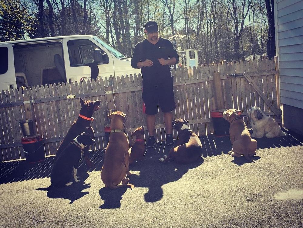 New England Canine image 3