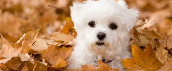 Pet Care Kennels image 1