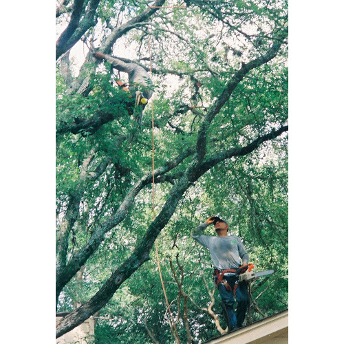 Gil's Tree Services
