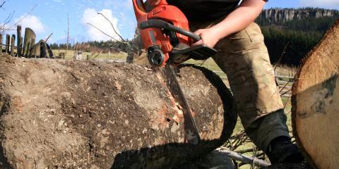 Francisco's Tree Service image 0
