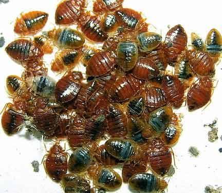 Superior Pest Management - Lafayette, IN 47909 - (765)319-8288 | ShowMeLocal.com