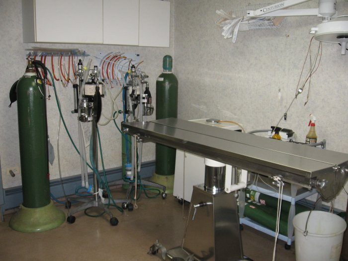 VCA Palmer Animal Hospital image 3