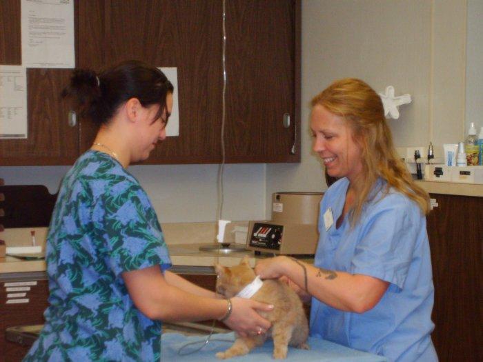 VCA Franklin Park Animal Hospital image 3