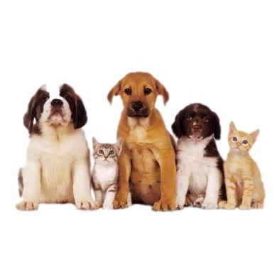 Downingtown Animal Vet - Downingtown, PA - Veterinarians