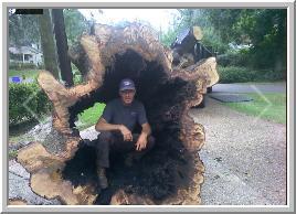 Hamilton Tree Service image 3