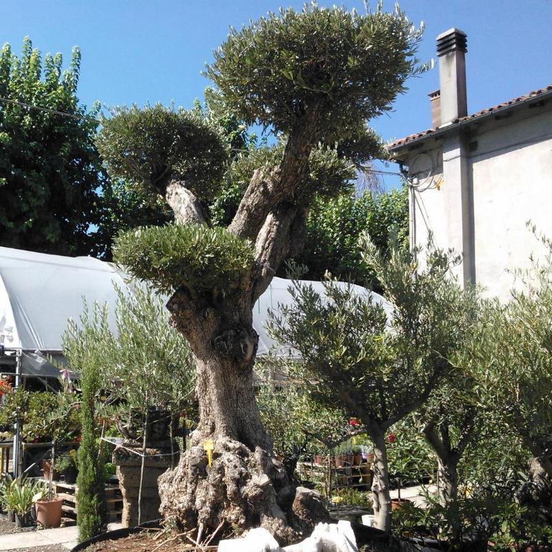 Cesari garden vivaio piante vivai piante articoli da for Piante da vivaio