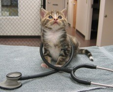 Happy Tails Veterinary image 0
