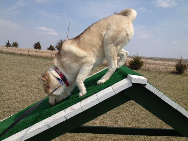 Ledges Farm Dog Camp image 4