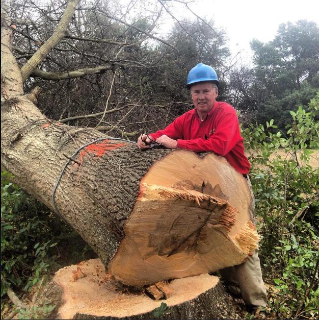 Allen's Tree Service image 2