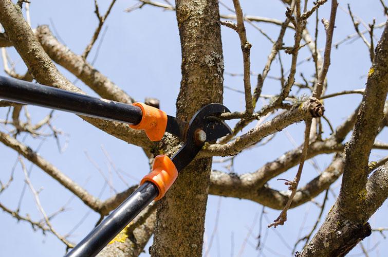 Michael's Tree Service image 1