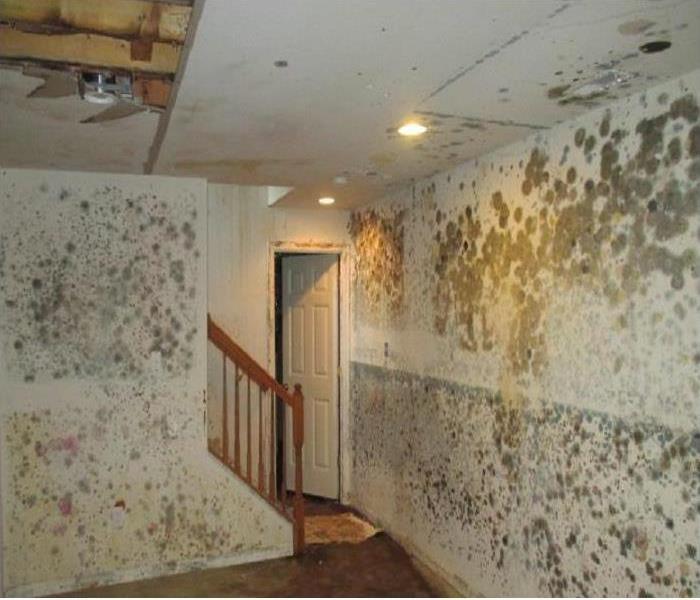 SERVPRO of Concord image 1