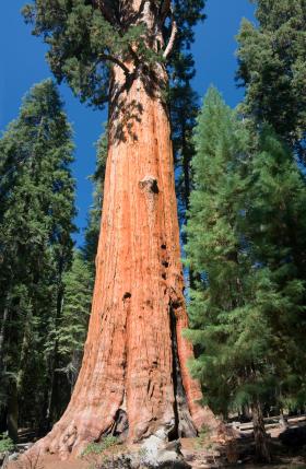 Visalia / Sequoia National Park KOA Journey image 22