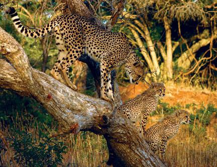 Saving Wildlife International image 6