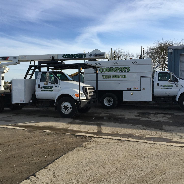 Cordova's Tree Service