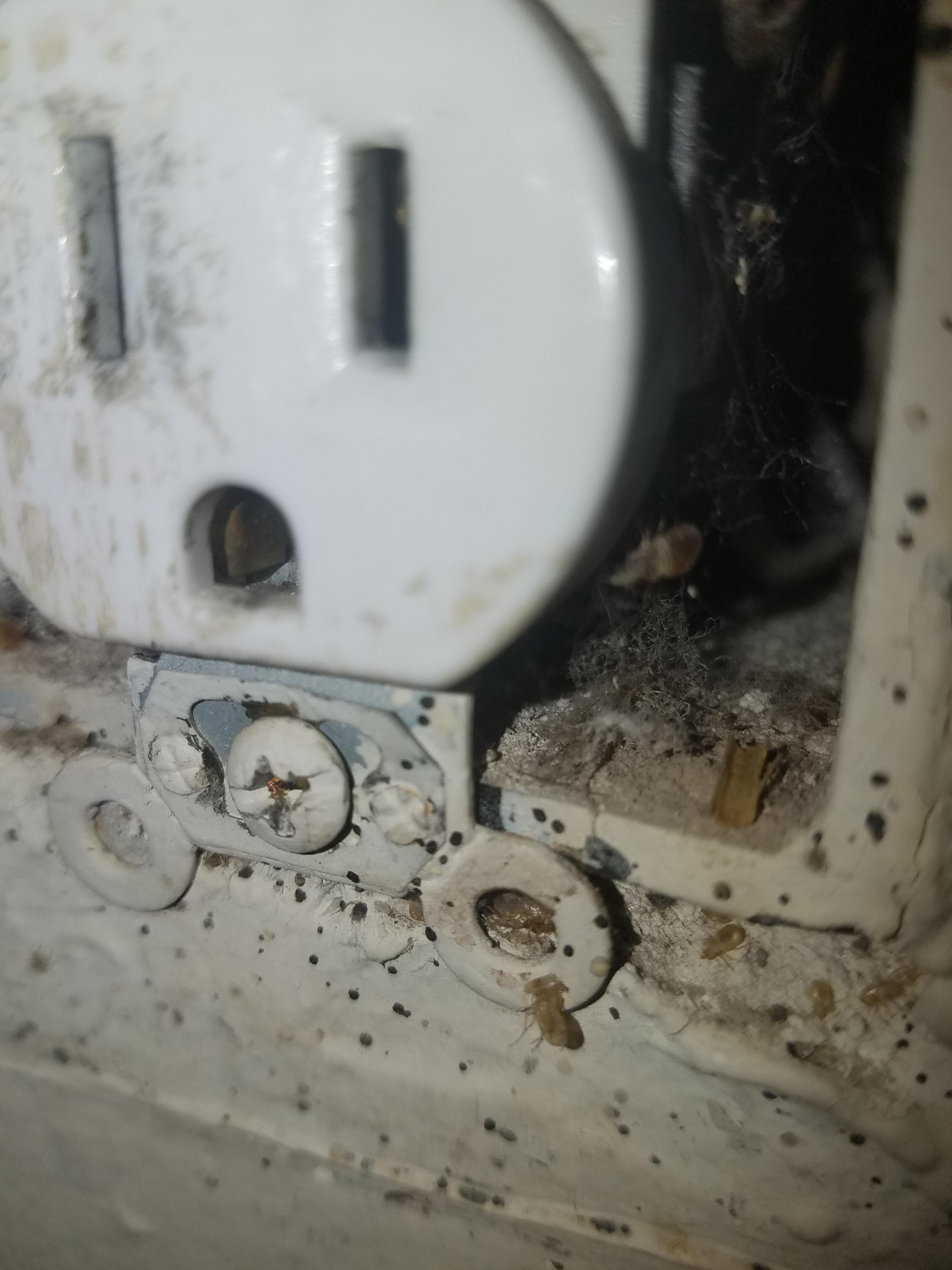 TLC Bed Bugs K-9 Inspection Service image 13