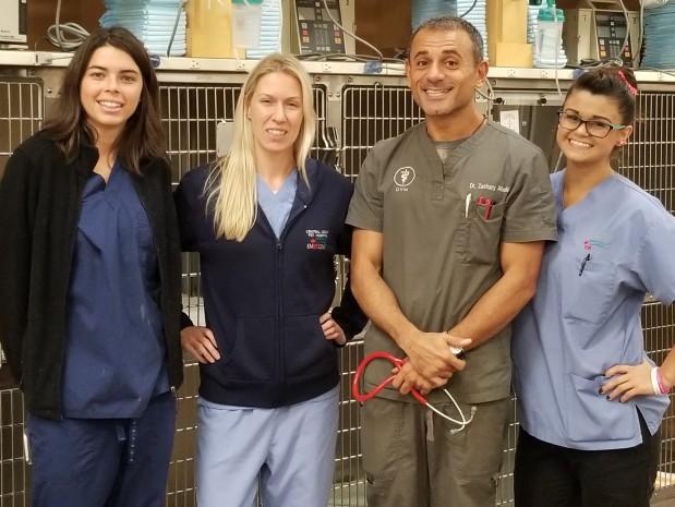 Central Coast Pet Hospital & ER image 0