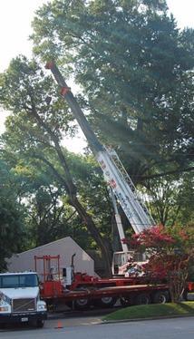 ABC Tree Service image 3