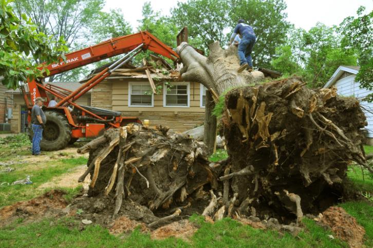 Tree Experts, Inc. image 3