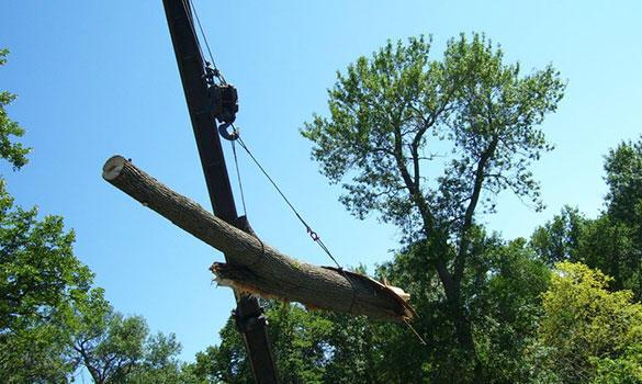 Arbor Master image 4
