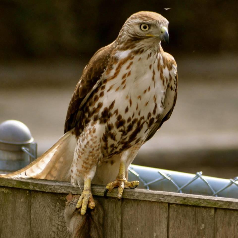 Mass Bay Wildlife Management Inc image 3