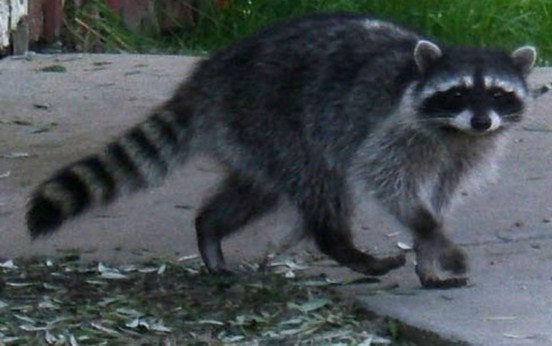 A All Animal Control of Madison image 0