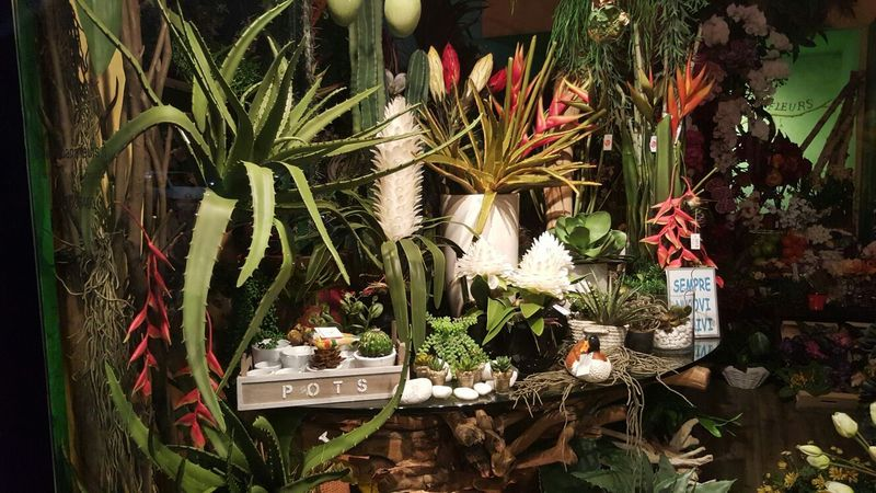 Kenzie Piante : Ikebana fleurs produzione commercio di fiori e piante