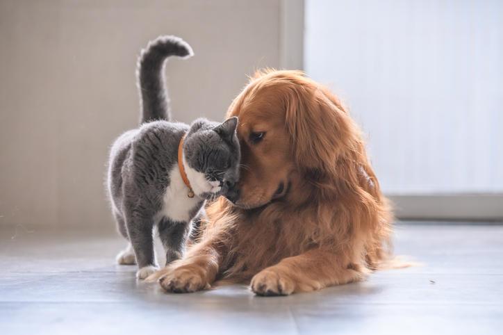 Clínica Veterinaria Mascotas y Mascotas S.A.S