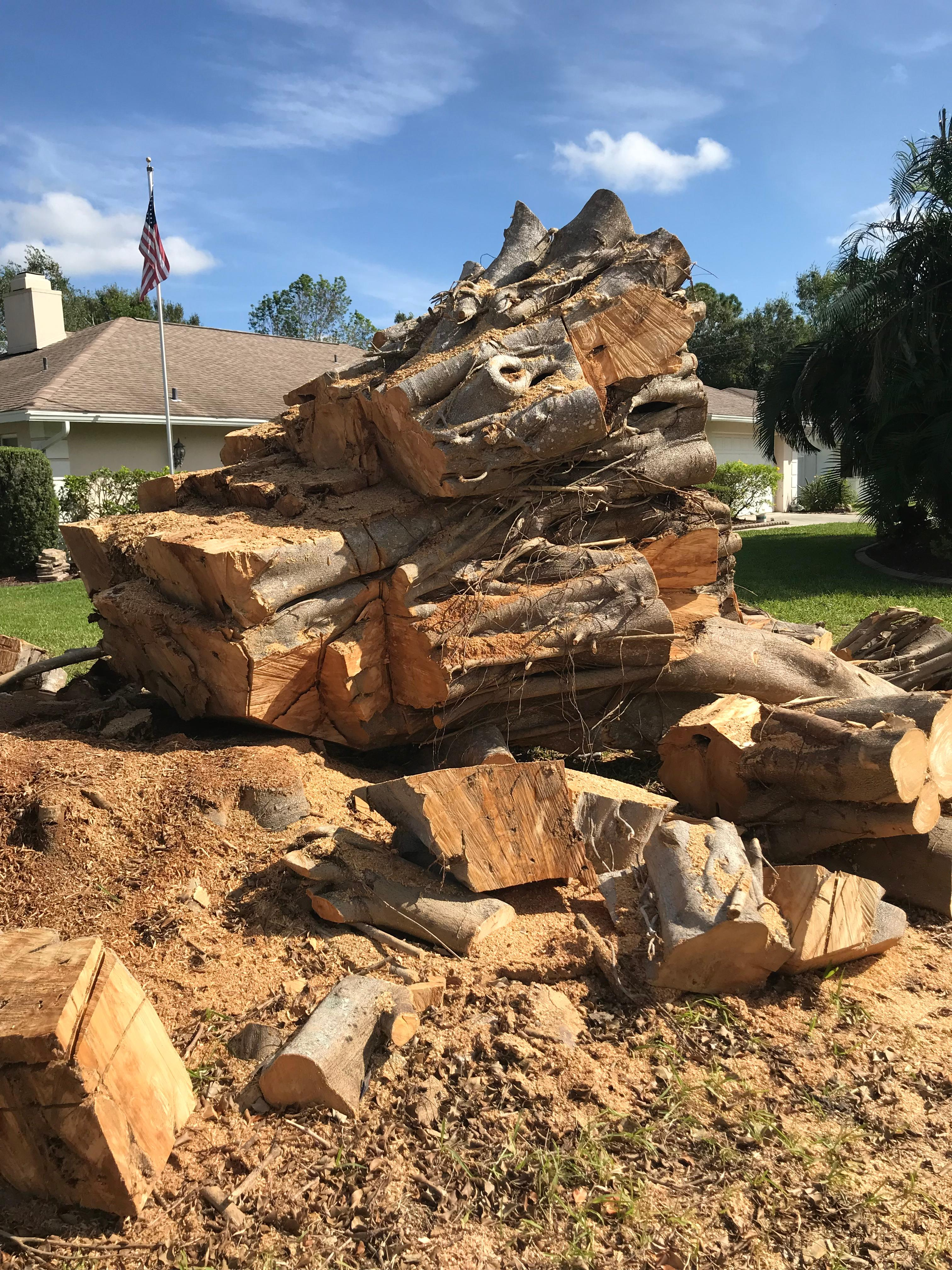 Troyer Tree Service image 1