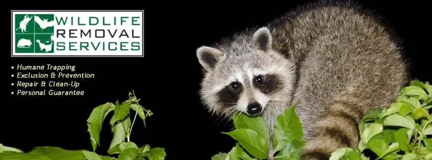 Wildlife Removal Services - ad image