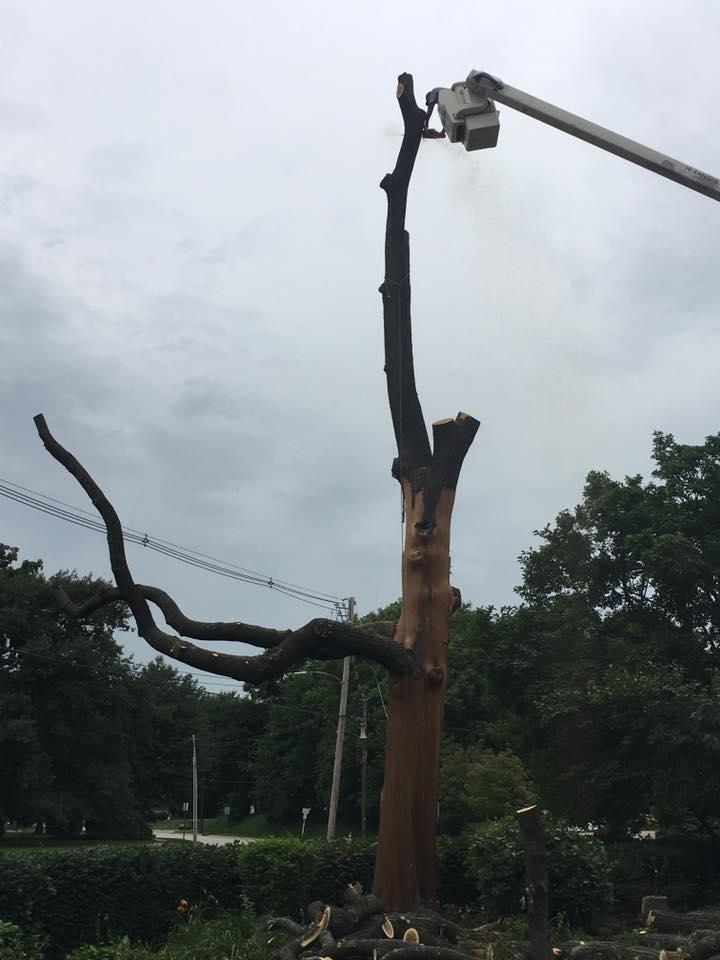 Freers & Sons Tree Service image 9