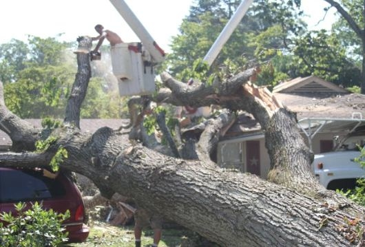 Sprouse's Tree Service LLC image 5