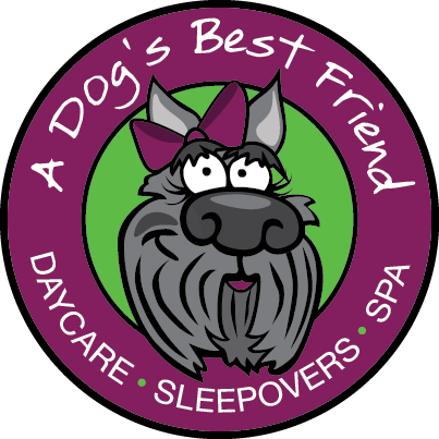 A Dog's Best Friend Doggy Daycare- East image 2