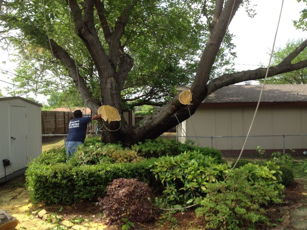 Aaron S Tree Service