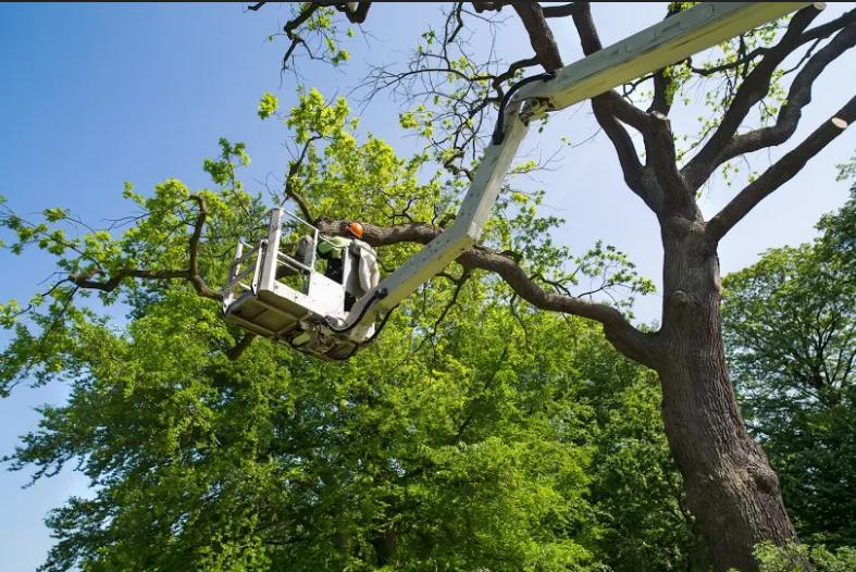 Mortensen Tree Service, Inc. image 2