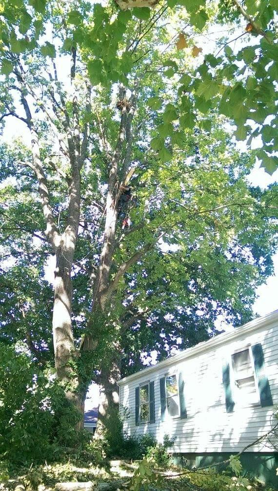 McAdams Tree and Landscaping Service image 3