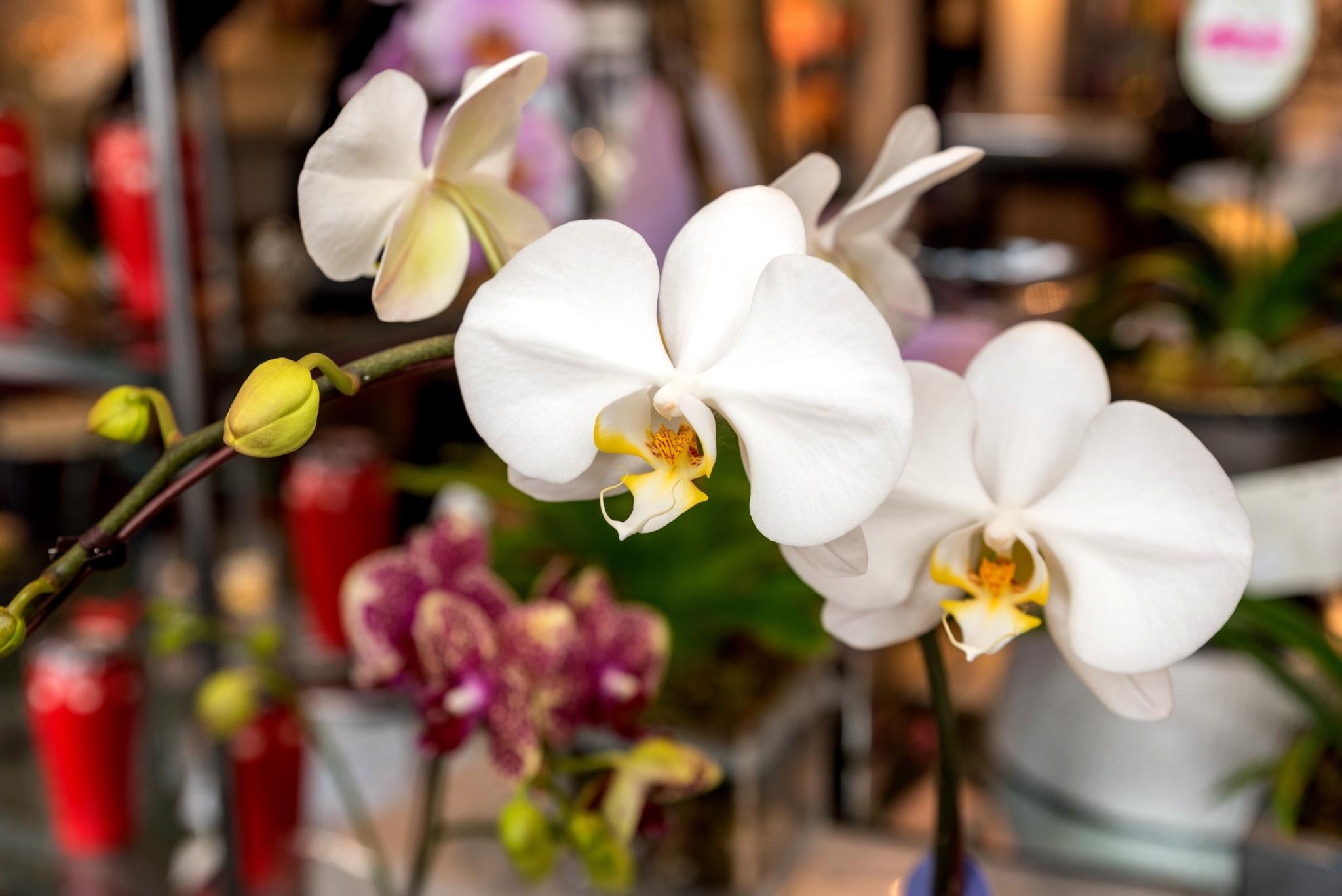 la belle fleur floral boutique ltd surrey bc ourbis