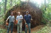 Patrick Musser Tree Service image 1