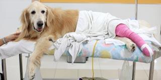 Teeter Veterinary Services image 3
