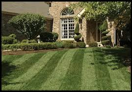 Backyards Lawn and Landscape image 1
