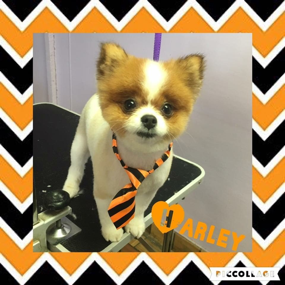 Paws & Claws Pet Grooming image 1