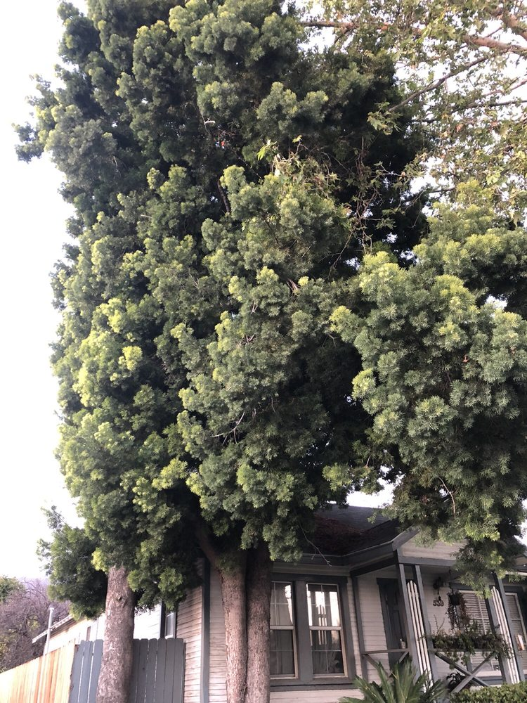 Golden State Tree Service image 2