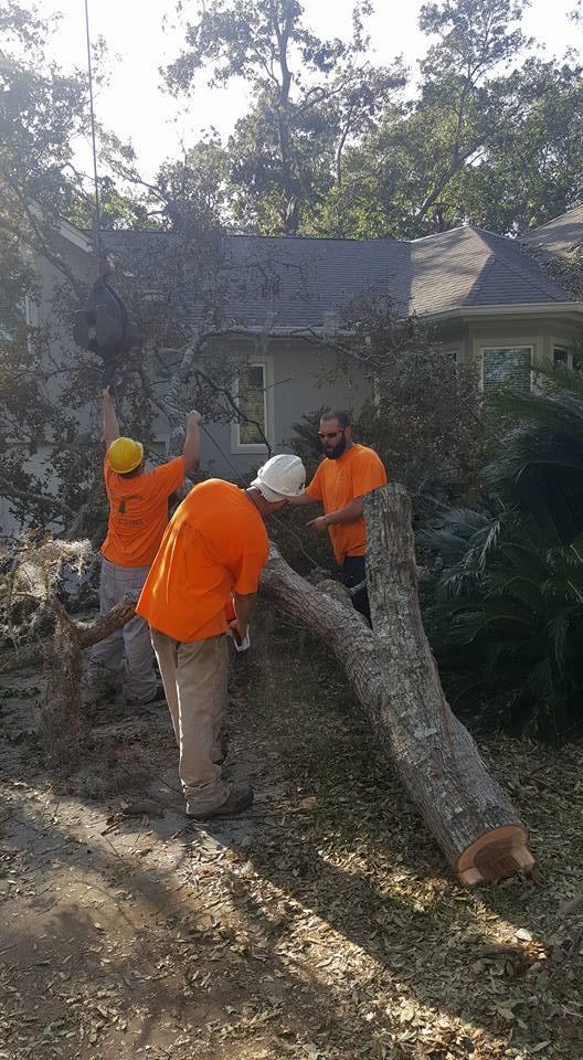 Bark Buster Tree Service image 2