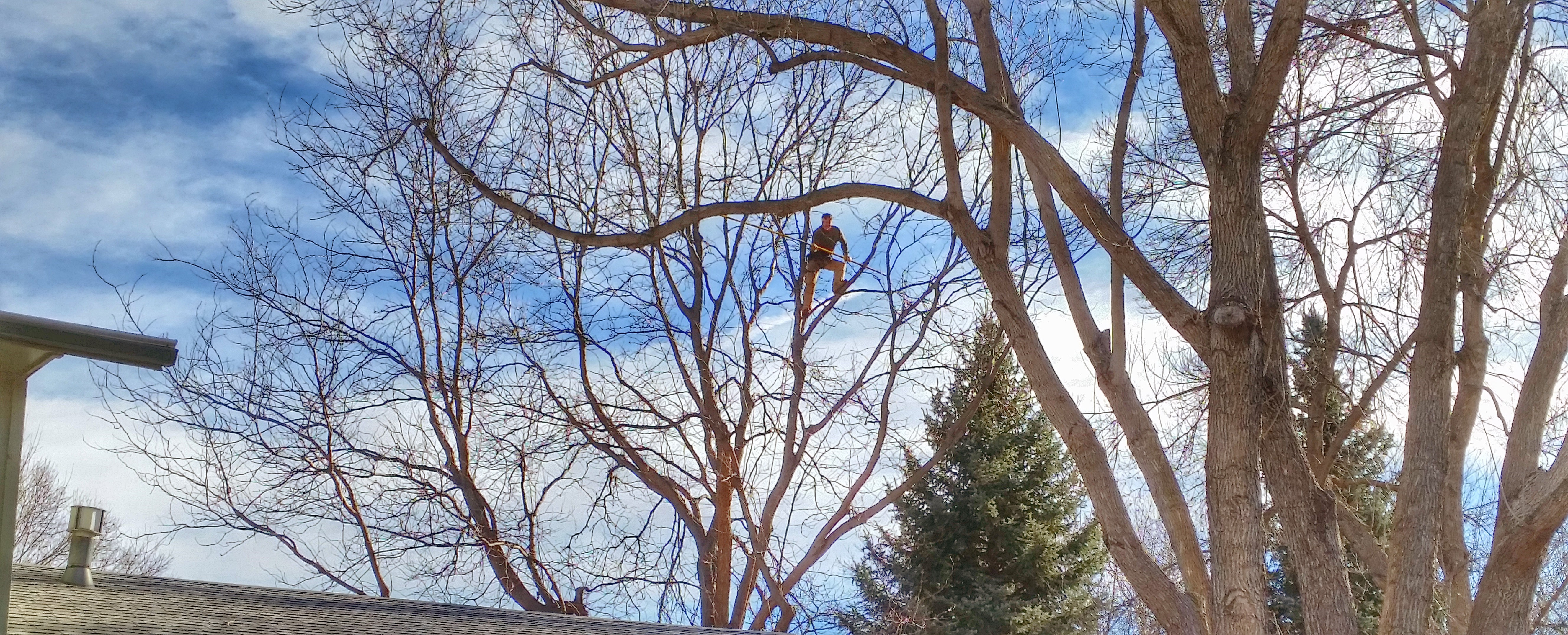 Foothills Tree Experts image 0