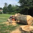 Woody Wood's Tree Services