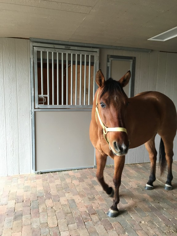 Lapeyre Ranch - Horse Boarding Facility image 0