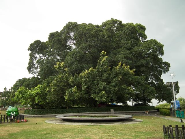 Tree Experts, Inc. image 1