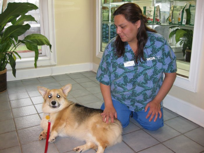 VCA Roswell Animal Hospital image 1