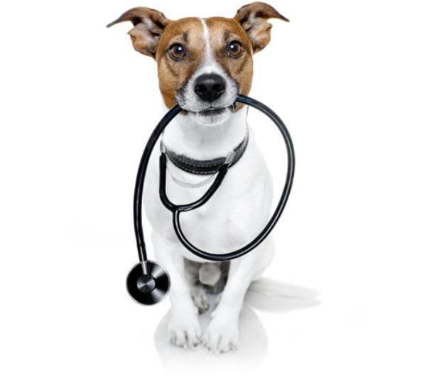 Hulen Hills Animal Hospital image 3